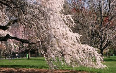 Frühlingserwachen – was Körper Geist und Seele jetzt brauchen