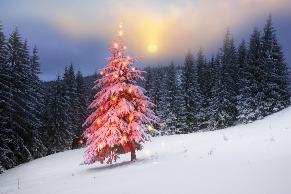 gesundessein | Weihnachten für Körper Geist und Seele